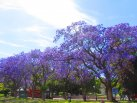 Lisboa na primavera