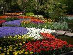 Colors of Keukenhof
