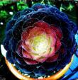 Galaxy Blooms