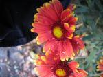 Floral Strange