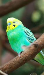 NotLove Birds