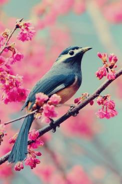 Natural_*
