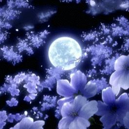 blooms in moonlight