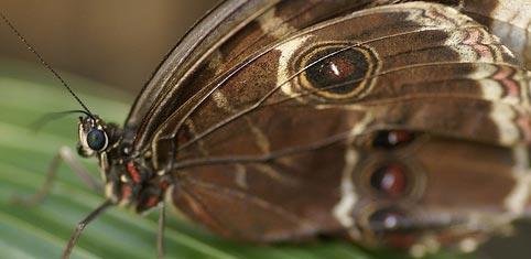 L'oeil de Caen - Butterfly