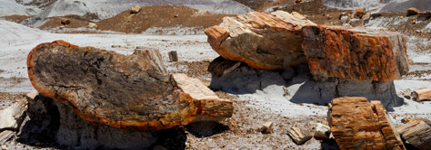 petrified forest logs
