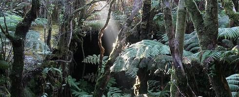 Rainforest, Hawaii
