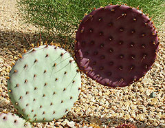 Cactus Erroneous
