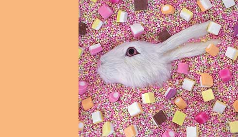 01site_bunny.jpg