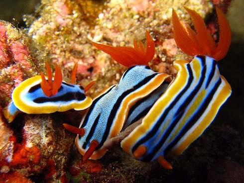 nudibranchs-1.jpg