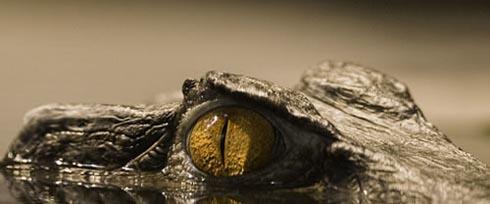 alligator5.jpg