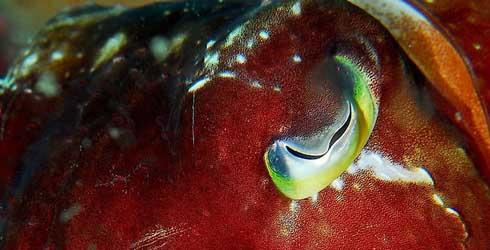 cylon_fish.jpg