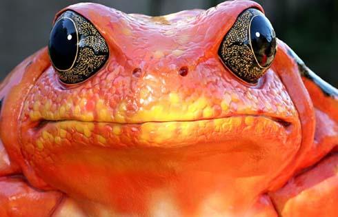 frog11.jpg