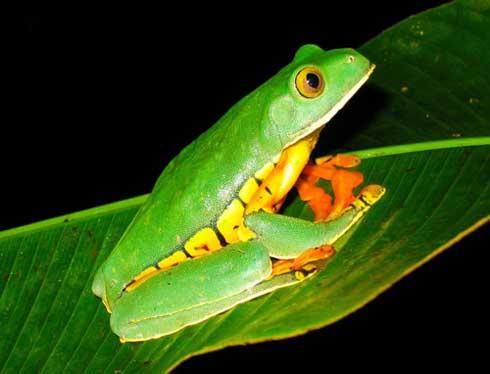 frog9.jpg