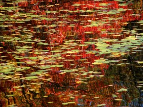 7-Monet's Abstract Pond