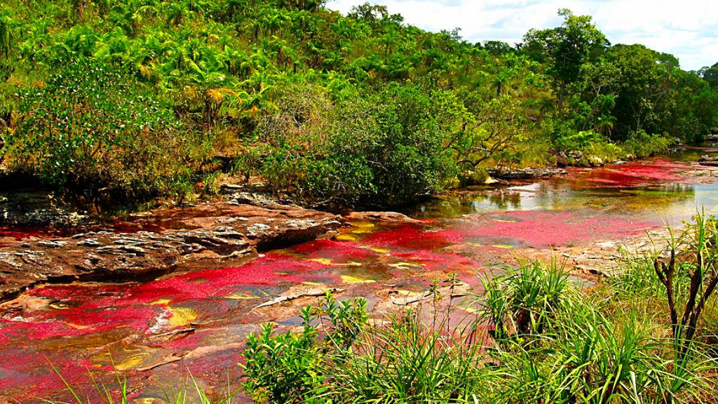 Cano-Cristales-River-Colombia