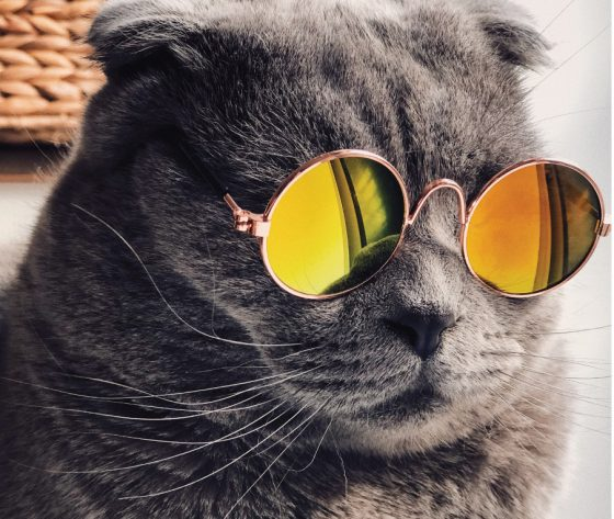 retro cat with glasses