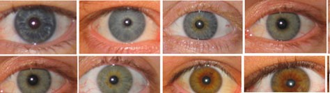 Eye Color Explained