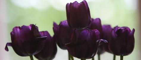 Color Symbolism: Purple