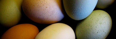 Which Color Came First: The Chicken or the Egg?