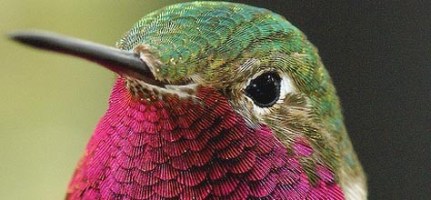 Feather Colors Affect Bird Physiology