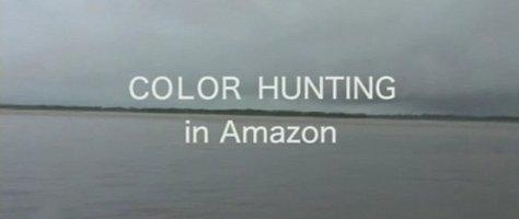 Dai Fujiwara's Color Hunting