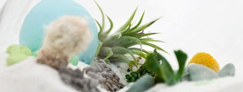 Create A Colorful Terrarium