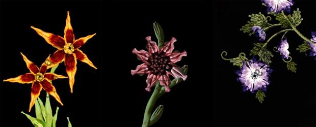 Cecelia's 'Flowers'