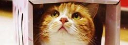 The Cat Princess' Treasure Box
