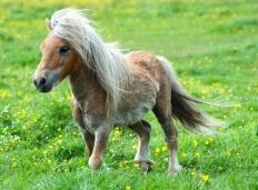 horses2000