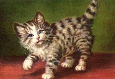 thecolorcat