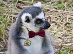 lemurlover22