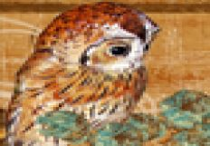 Owlets2
