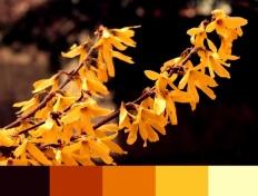 autumnh