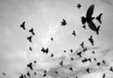 thethirdlittlebird