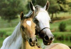 horsecrazy57