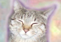Meowler