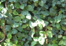 greengreenturtle