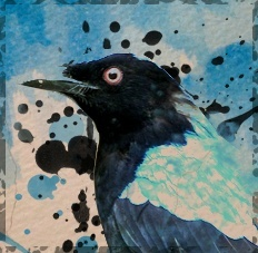 bluefeather_bird