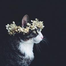 kittycupcakexox