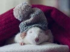 Crochet_Ninja