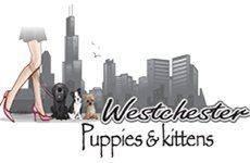 westchesterpuppies