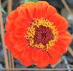 Floral 27