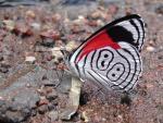Butterfly Warrior
