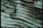 Cerulean Wood