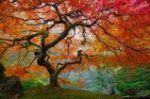 Tree of Change 2