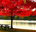 fall tree in summer