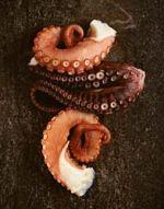 Octopus Tenticles