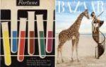 Bazar's Giraffe