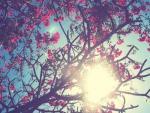 Instagram tree
