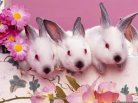 Happy Easter,Jesus